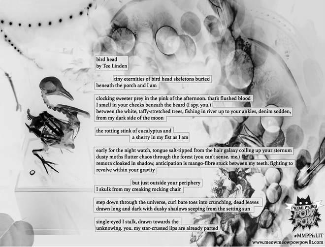 bird-skull-tee-linden_1
